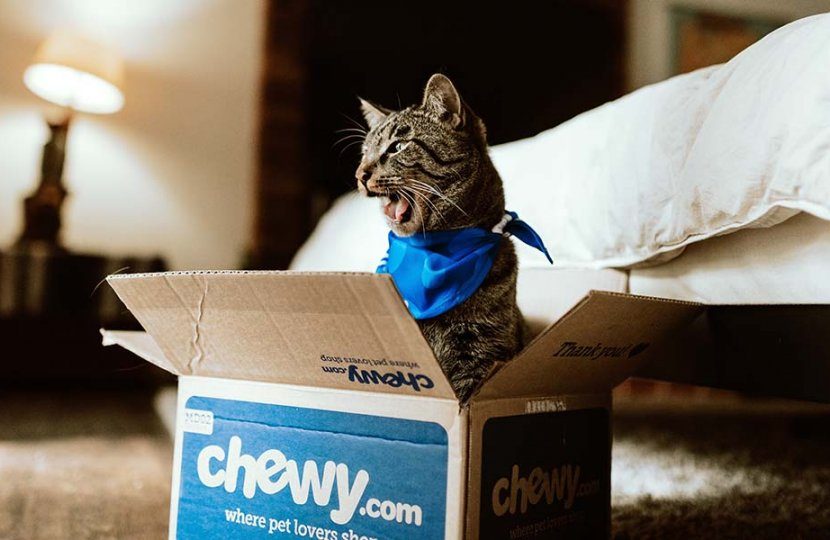 Photo of a cat in a box